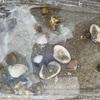 海の日✦明石の林崎海水浴場で自然に触れる