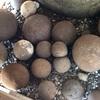 絶える事のなき信仰心を今に伝える 森戸神社の子産石(葉山町)
