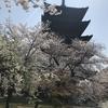 春の京都 桜の名所を巡る その2東寺