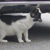7月17日 新宿区西新宿から余丁町の猫さま とその情景