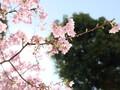 5泊6日で西をぐるっとしてきた!【大阪、兵庫、徳島、香川、愛媛、高知、大分、熊本、福岡】