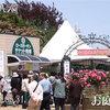 朝4時に起きて京成バラ園に行って来た・・・7時の飛行機で8時半に羽田。京急・都営浅草線・地下鉄東西線・東葉高速線・東洋バスを乗り継いで京成バラ園に到着したのは11時。5時間半バラを見てました(^_^)vさっき日帰りで帰宅(>_<)