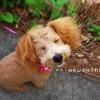 生後5ヵ月、初めてのトリミング|犬の毛をカットしてもらった日
