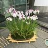 浪速区役所入口の綺麗な花ご覧になられましたか?