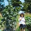 野菜嫌いの我が子に平塚のトマトを食わせてやりたい