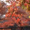 京都・洛北へ紅葉狩り