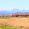 ハイイロチュウヒのいる風景ー男体山