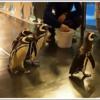 ソラマチの水族館は大人のデートピッタリ♪コラボ企画をチェックしてすみだ水族館へ行こう!