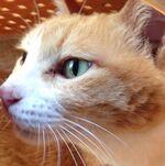 【家族】子供の頃に猫に救われて、大人になって飼い猫とのお別れがとても悲しかったお話