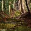 秋葉神社の参道 福岡県上頓野