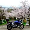 トランザルプで桜巡り