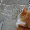 野猫保護施設の方来訪 と父