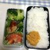 弁当・料理(12月上旬)
