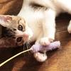 【猫燻】〜気の向くまま、尾とヒゲの向くまま〜