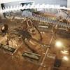 恐竜好きの息子を「いのちのたび博物館」に連れて行ってあげたいけどなかなか時間がない…