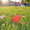 庭の雑草対策まとめ【除草剤・防草シート・固まる土・砂利など】
