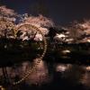 六本木夜桜フォトウォーク2018(2018/3/27)