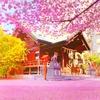 小さな境内は春爛漫!桜とミモザが咲き誇る蔵前神社へ~現在の開花状況と見ごろ~