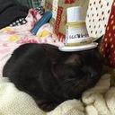 Bプロ大好き黒猫ナナのBlog-project☆