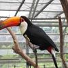 子連れお出かけ 鳥と触れ合える掛川花鳥園へ行ってきました GWの混雑度は?