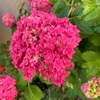 定番の季節の花