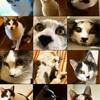 子ネコの誕生日 (今日から成猫)