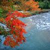 藤琴川と紅葉(秋田県山本郡藤里町)