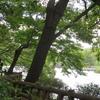 井の頭公園でひとやすみ♡吉祥寺産経学園さまのタロットレッスンの前に