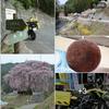 """『桜』も『紅葉』も 今年・来年は、ヤッパリ """"TOKYO"""" だね ^^!"""