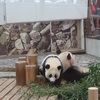おっちゃんと白浜にパンダを見に行く!その2