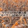 【ワンピース】バジル・ホーキンスの能力解説!ワラワラ実の藁人間の強さとは!【913話ネタバレ考察】