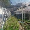 陰樹植木用苗床  設備完成