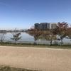 大阪淀川マラソンまであと4日!。。今日はレース時間に走ってみました。。