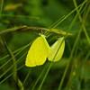唱歌「蝶々」この歌には、「菜の花」という言葉はない。登場するのは「菜の葉」だけ