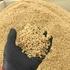 零細農家の稲刈りを見てみよう!あまり知らないお米ができるまで【稲刈編】