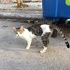 ギリシャのラフィーナも猫がたくさん!港町には猫が居るの法則(世界の猫探し84~86匹目)