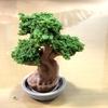 「知育」「お菓子」「おかしで作る盆栽」を娘と作ってみました