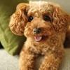 飼ってみて初めて分かった!犬のかわいい&面白いしぐさ10選!
