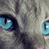 ハリウッドで印象に残らない微妙な映画が増えた理由!『save the catの法則』の問題提起!
