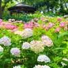 【旅行記】梅雨のハウステンボス・あじさい祭②
