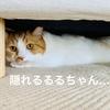 【猫学】動物病院を嫌がる猫のストレスを軽減させる方法6選