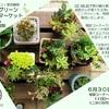 miniグリーンマーケット&グリーン相談会 6/30(金)開催です