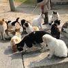 香川県 ねこ島(佐柳島)2つの集落、本浦集落の猫達、強烈な猫パンチ!!