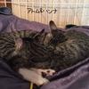Kitten - 子猫達