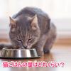 猫のごはんの量や回数は年齢に応じて変えていこう!