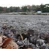 今冬初めて氷点下のポタ