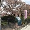 岐阜県観光大使の桜情報~一本何役?珍しい桜~