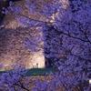 兼六園・金沢城「夜桜花見」ライトアップ2020年【辰巳櫓編】