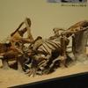 大恐竜展−ゴビ砂漠の驚異