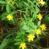 ずっと前 ご近所さんから頂いた 黄色い花!
